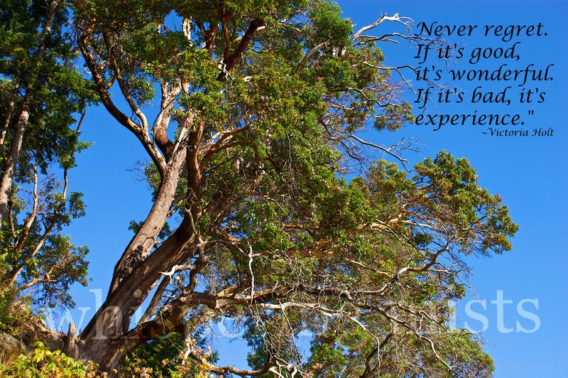 DSC08829 experience quote